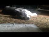 Вот так, моя собака спит))
